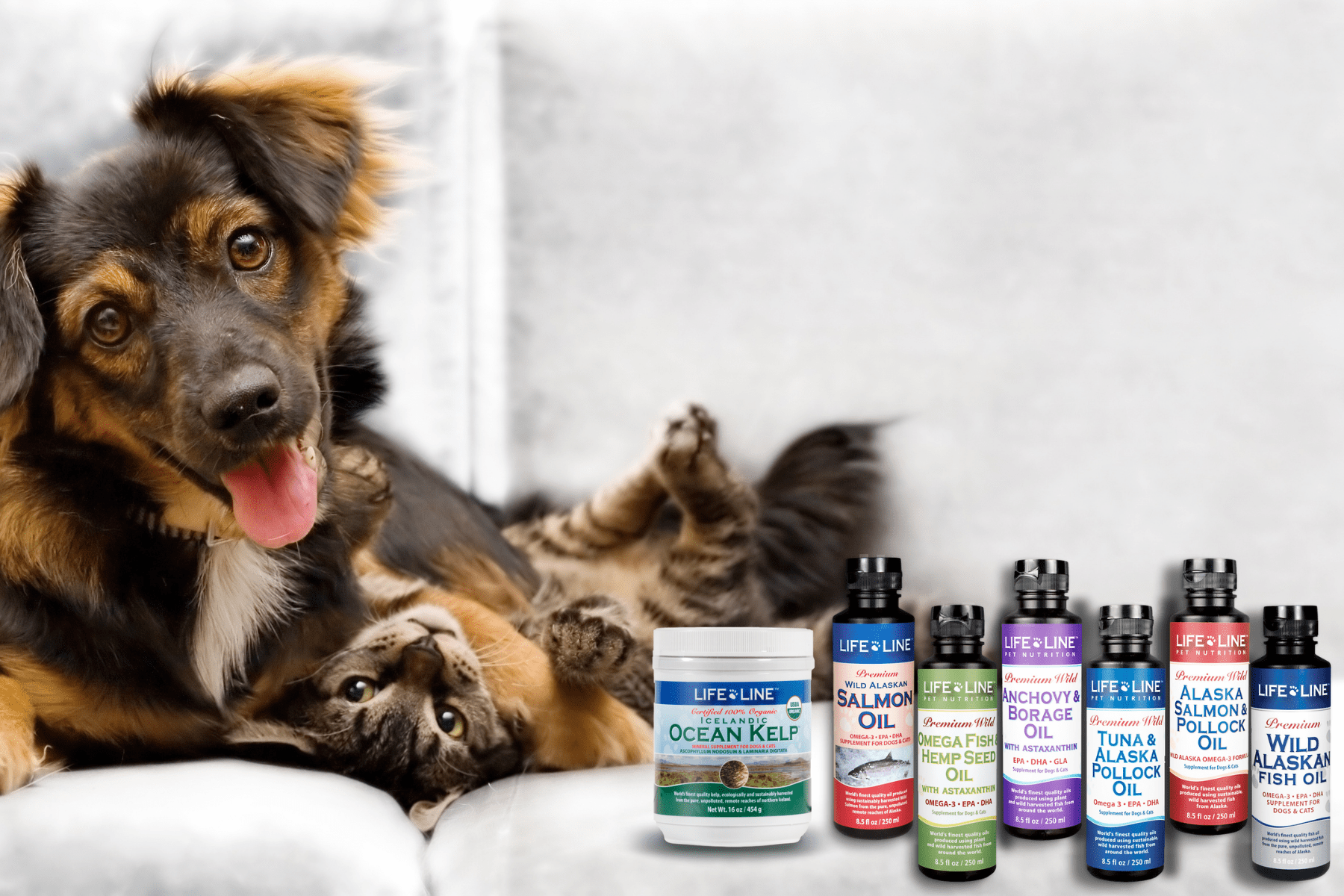 supplements for dogs and cats